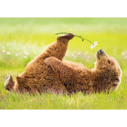 orso yoga