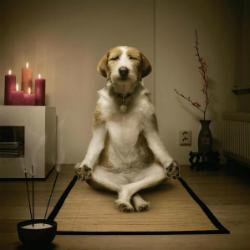 pratichiamo_meditiamo_centro_ray